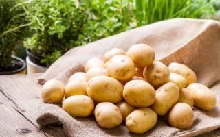 Лучшие сорта картофеля для средней полосы России