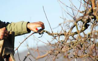 Подготовка колоновидных яблонь к зиме в Сибири