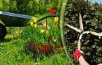Садовые ножницы – как сделать сад ухоженным и красивым