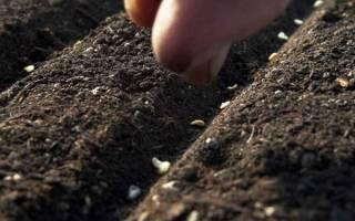 Подзимний посев овощей в Сибири