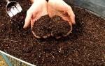 Как приготовить биогумус на даче?