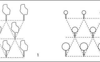 Расстояние между саженцами плодовых деревьев