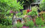 Неприхотливые растения на дачном участке