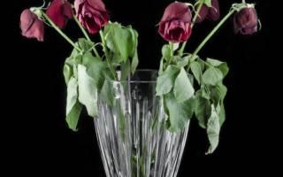 Размножение розы из букета – как укоренить подаренные цветы?