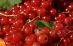 Посадка красной и черной смородины – ищем 10 отличий