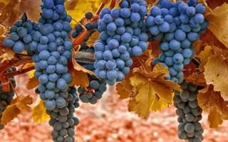 Как подготовить виноград к зиме на даче?