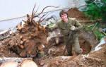 Как правильно выкорчевать дерево?