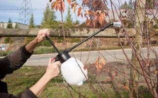 Препараты для обработки сада – как получить правильный урожай!