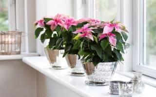 Цветы комнатные по фэншую в квартире