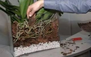 Какая земля нужна для орхидей при пересадке