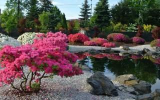 Низкорослые декоративные кустарники и полукустарники как украшение сада