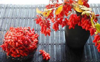 Варенье из барбариса – готовим полезное лакомство на зиму