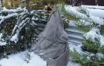 Укрытие рододендрона на зиму в Сибири