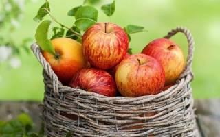 Коричное полосатое – сорт яблок для длительного зимнего хранения