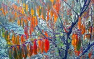 Как подготовить к зиме персиковое дерево?