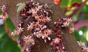 Выращивание какао бобов в России