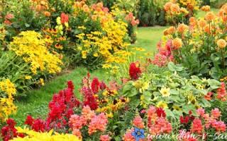 Какие цветы можно сажать осенью на даче?