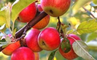 На какую глубину сажать саженцы яблони?
