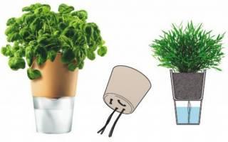 Фитильный полив – пусть растение само решает, сколько пить!