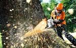 Как распилить упавшее дерево?