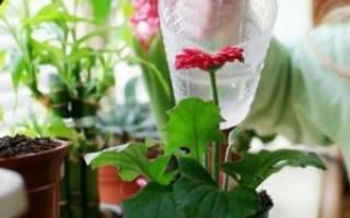Комнатные цветы как поливать дрожжами
