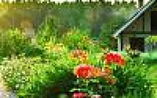 Чем отличается дачный участок от садового участка?