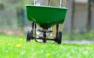 Как правильно посадить газонную траву на даче?