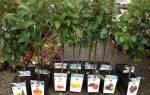 Осенняя посадка плодовых саженцев