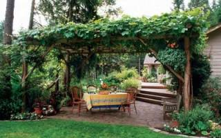 Какие лианы можно посадить на даче?