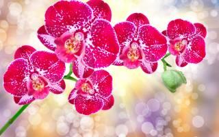 Зола для цветов комнатных