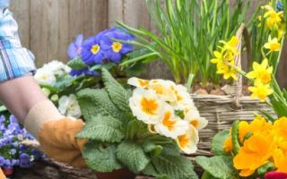 Как развести много цветов на даче?