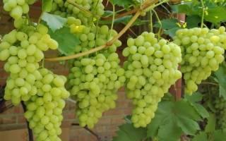 Когда пересаживать виноград в средней полосе России?