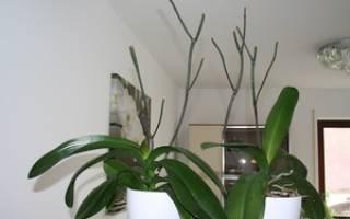Когда обрезать орхидею после цветения