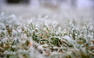 Подготовка газона к зиме в средней полосе