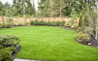 Когда сеять траву на даче?