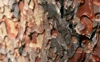 Как использовать кору сосны на даче?