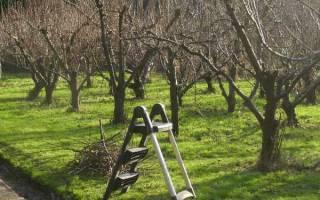 Правильная обрезка плодовых деревьев весной – делимся секретами!