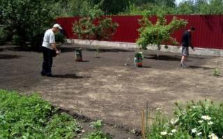 Когда лучше сеять газонную траву на даче?