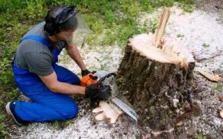 Как легко выкорчевать дерево?
