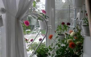 Цветы комнатные маленькие