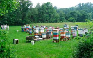 Можно ли разводить пчел на дачном участке?