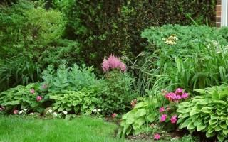 Какие кустарники растут в тени на даче?