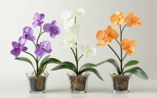 Пересадка орхидеи цветущей