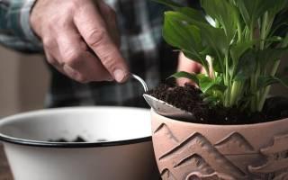 Почва для пересадки спатифиллум
