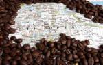 Сколько растет кофейное дерево?