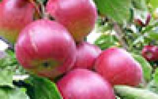 Какого возраста саженцы яблони лучше сажать?