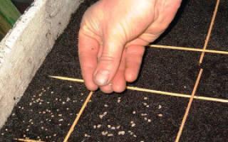 Правильный полив капусты – от рассады до сбора урожая