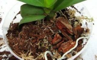 Грунт для орхидей в домашних условиях