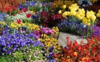 Лучшие сорта цветов для Сибири