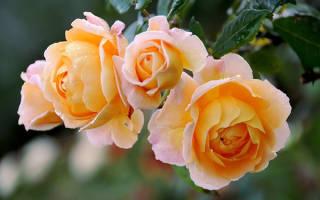 Какие цветы цветут осенью на даче?